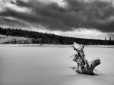 A stump protruding from some snow in Kananaskis Country, Alberta, Canada