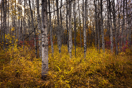 The leaves changes color as autumn takes hold at South Glenmore Park, Calgary, Alberta, Canada
