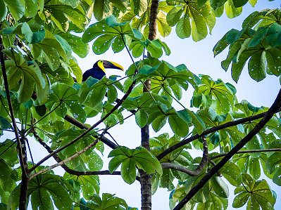 Sam just hanging out in one of the trees at Casa de Jupiter near Dominical, Costa Rica