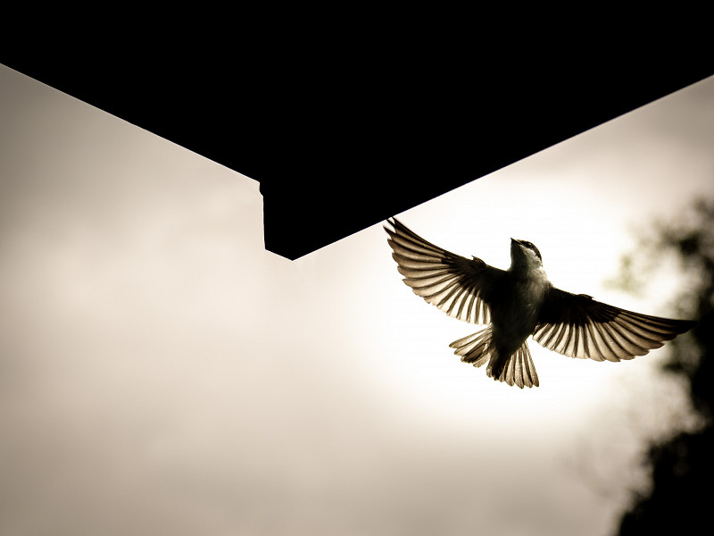A bird perfectly backlit by the sun, from the back of a tour boat near Limón, Costa Rica