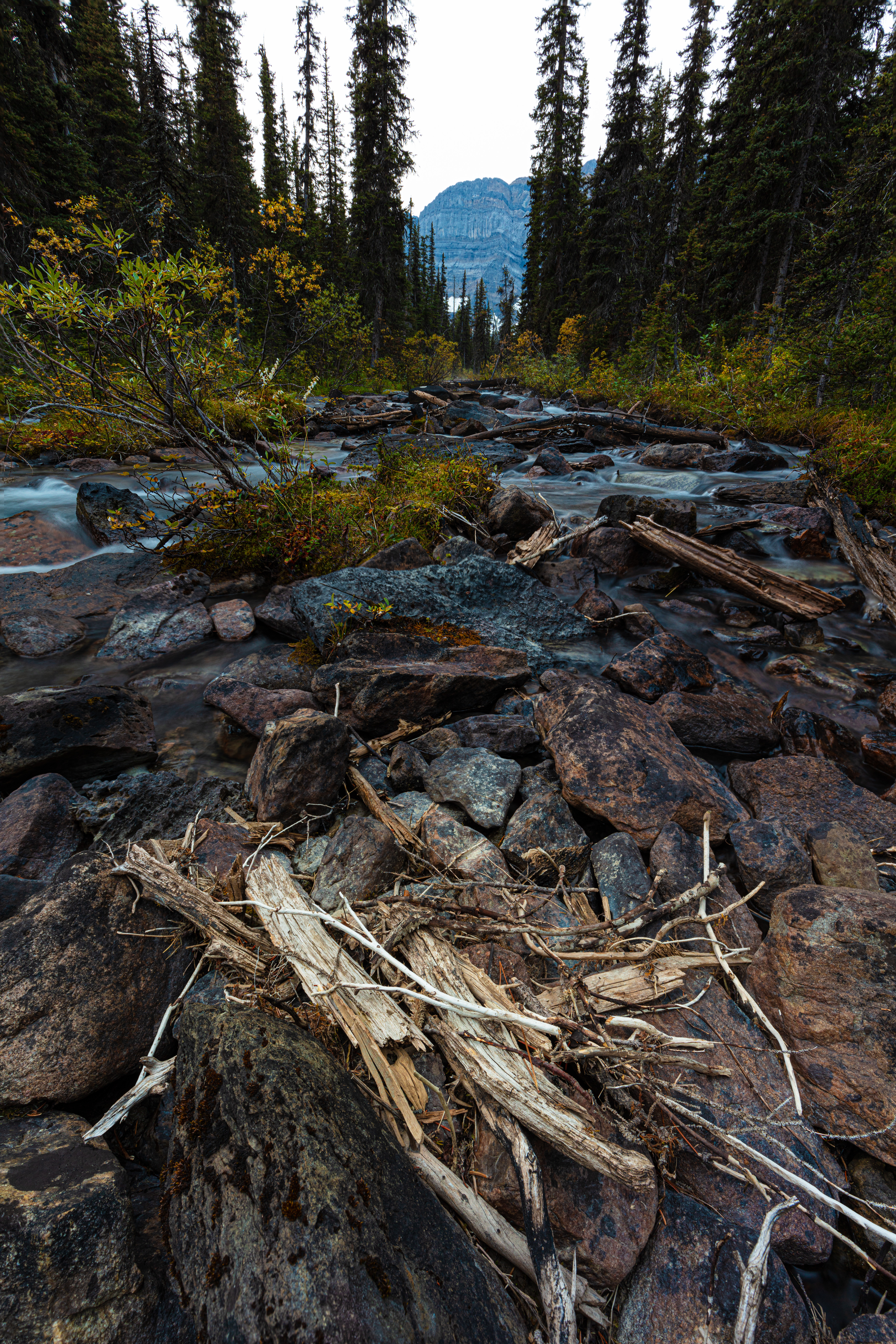 Deadwood caught up in some rocks in the stream leading up to Cirque Lake near Lake Louise in Alberta, Canada