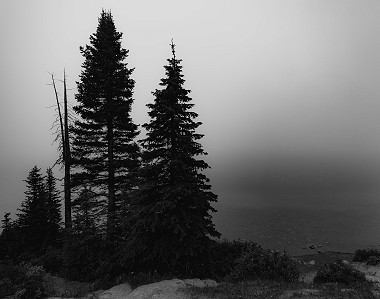 Several trees sit in front of a foggy Bow Lake near Lake Louise in Alberta, Canada