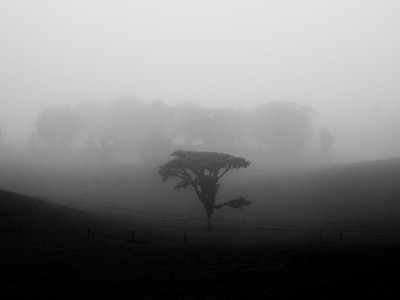 A single tree stands alone in the rain and fog along a highway in Costa Rica